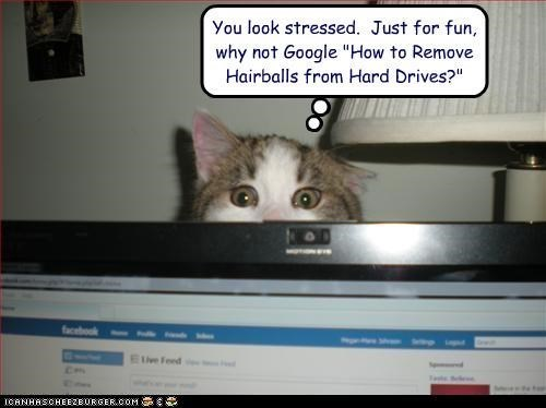 Cats,hairball,the internets