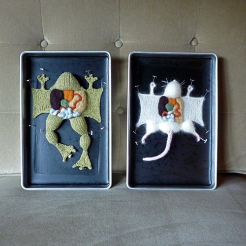 an adorable rat and frog to dissect