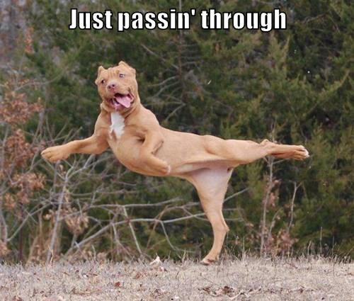 animals passing caption - 8458418944