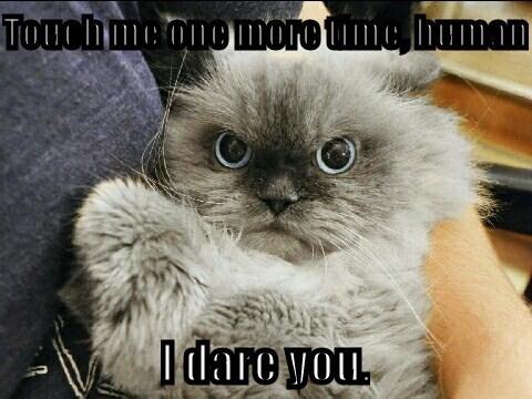dare Cats - 8458494720