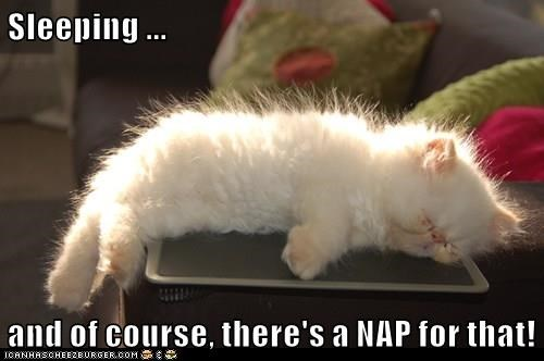 animals cat nap sleeping App - 8458552576