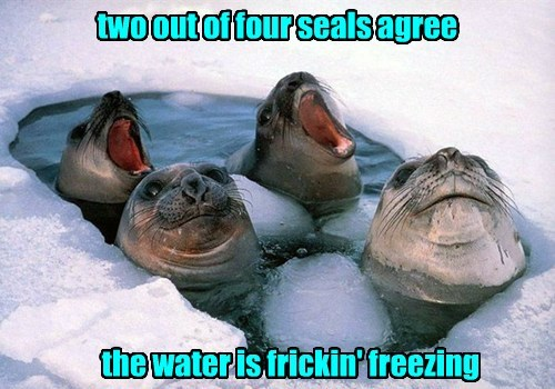 seal cold ice - 8458709248