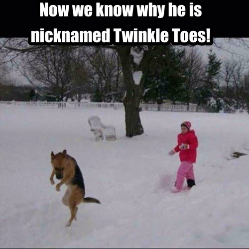 animals memes dog snow Toes Walking Tip dogs snow - 8458756608