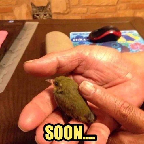 animals memes Cat bird Stalk SOON bird Cats - 8458758400