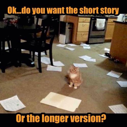 animals memes Cat lol kitten Mess Story mess Cats - 8458763264