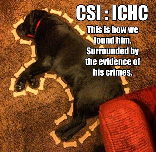 Funny meme of a dog taking a nap with a body outline like they have on CSI.