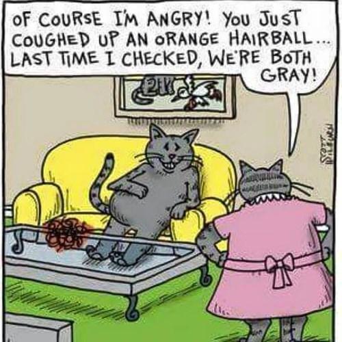 cheating Cats web comics - 8459172608