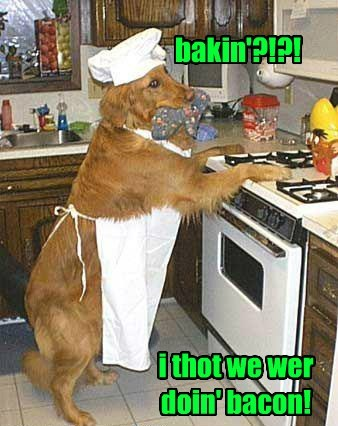 dogs chef confused bacon - 8459682304