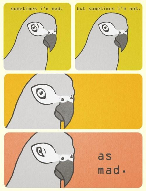 funny-web-comics-the-duality-of-birds