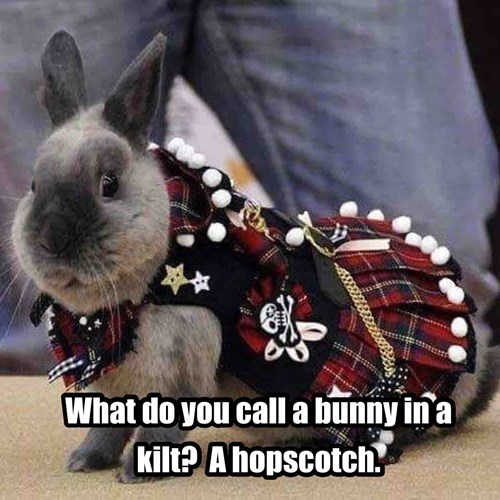 Image of: Funny Bunny Animals Puns Kilt Puns Bunny 8459851520 Kidskunstinfo Punny Bunny Is Not So Bad Can Has Cheezburger