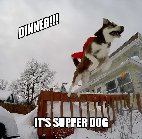 dogs,puns,dinner,super hero