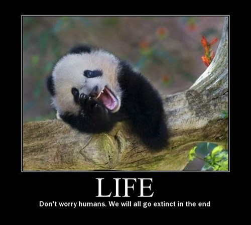 life depressing panda funny - 8459987456