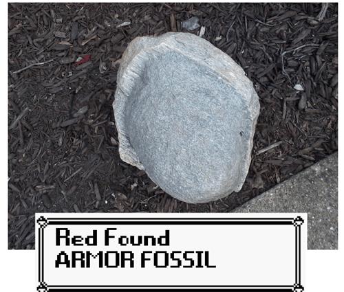Pokémon,IRL,armor fossil,fossils