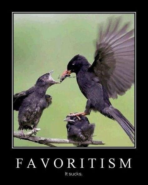 wtf birds kids love funny - 8460230144