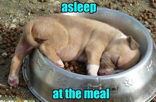 dogs nap puppy puns noms - 8460286720