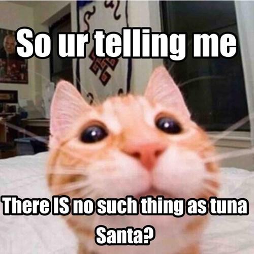 animals tuna santa Cats - 8460291328