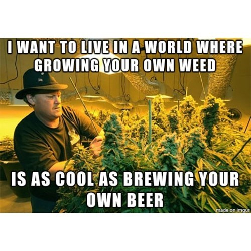 brewing is as cool as growing weed