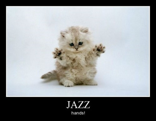 jazz hands cute Cats funny - 8461406976