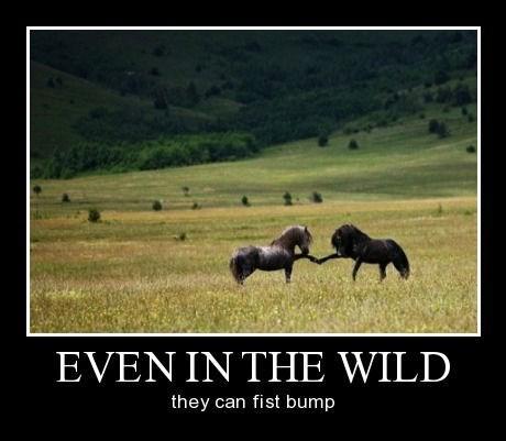 horses,fist bump,funny,wild