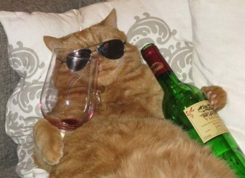 Cats can be real cool