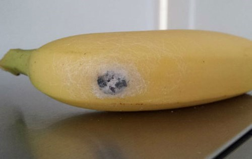 funny-news-fail-spider-banana