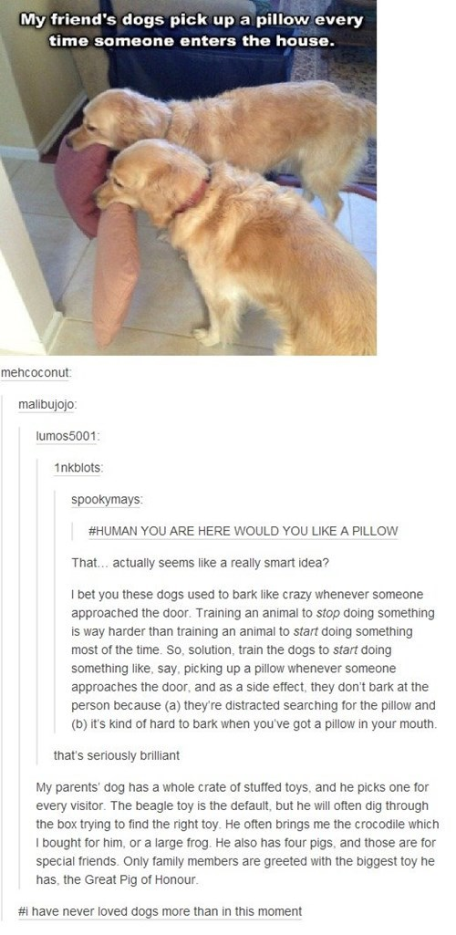 funny-tumblr-pics-dogs-pets-training