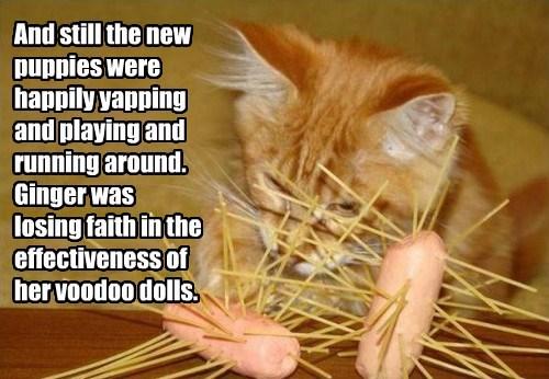 captions Cats funny - 8461917952