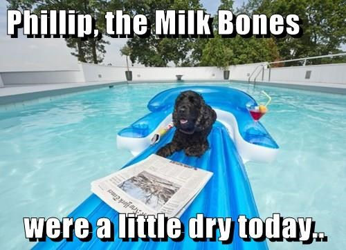 Phillip, the Milk Bones   were a little dry today..