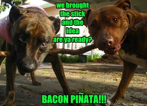 pinata stick idea dogs bacon