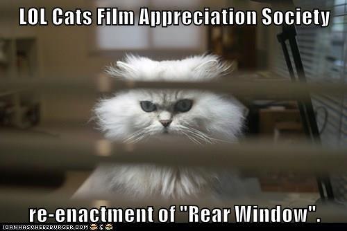 animals rear window cat film caption - 8462554880