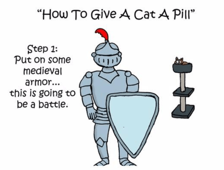 illustrated knight with armor and a cat