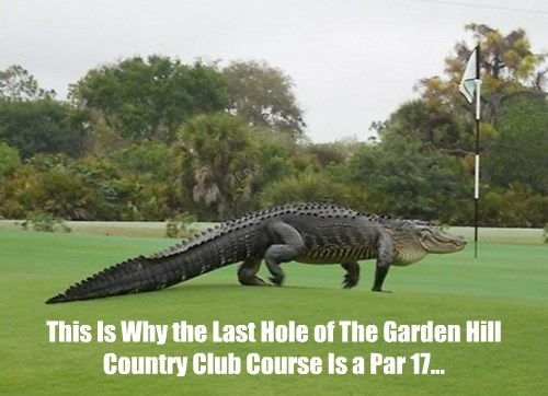 alligator,golf,nope
