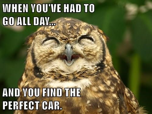 animals poop that moment Owl happy - 8463008256