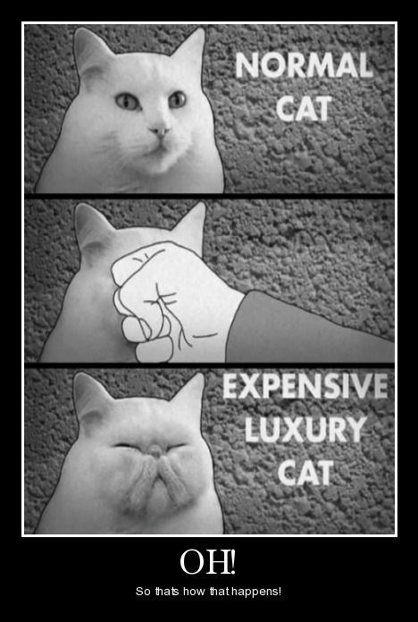 expensive Cats funny - 8463118848