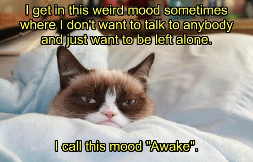 go away Grumpy Cat nope awake Cats - 8463240448