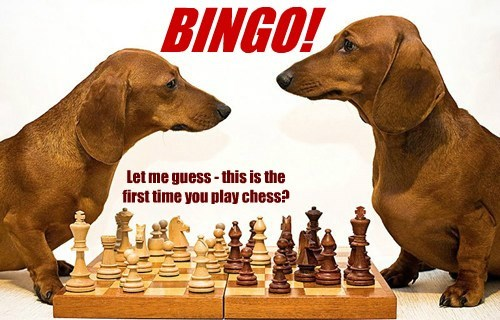 dogs chess caption bingo - 8463417600