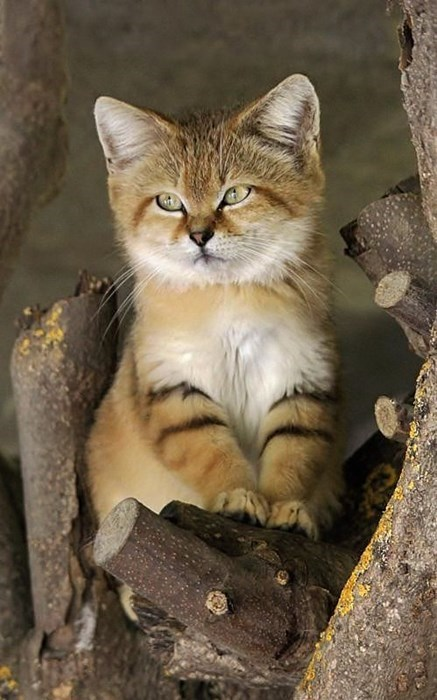 cute baby animal desert kitten