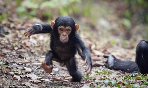 cute baby animals moneys first steps