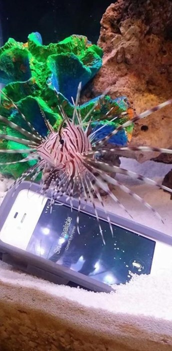 funny-phone-fails-aquarium