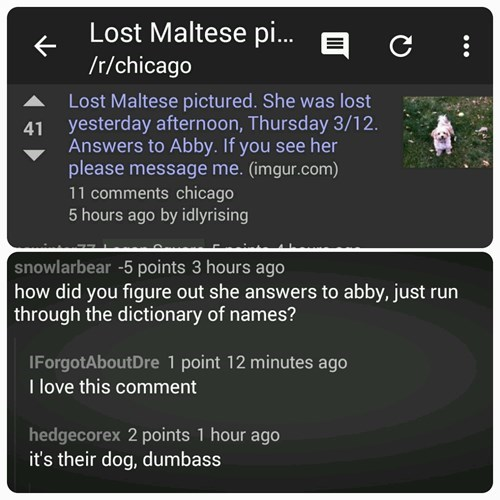 funny-imgur-pic-lost-dog-name