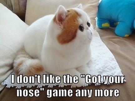 animals persian nose Cats - 8463572480