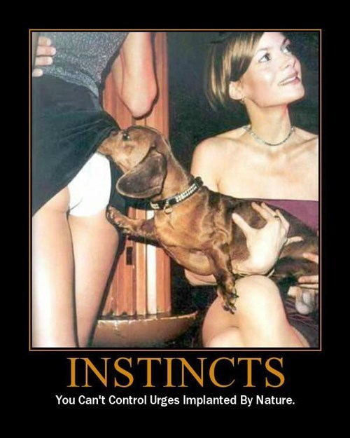 booty dogs instincts funny - 8463655424