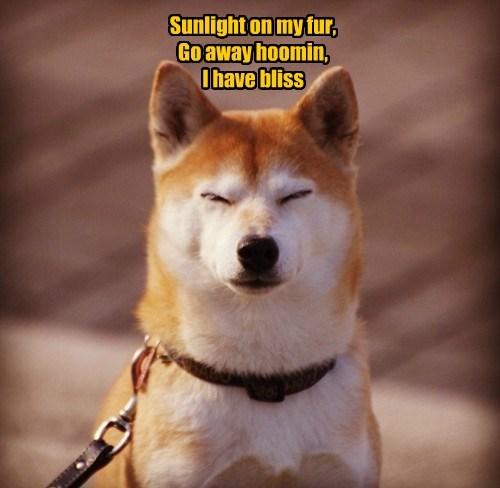 go away dogs bliss shiba inu - 8463785728