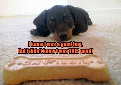 dogs good boy caption - 8463923968