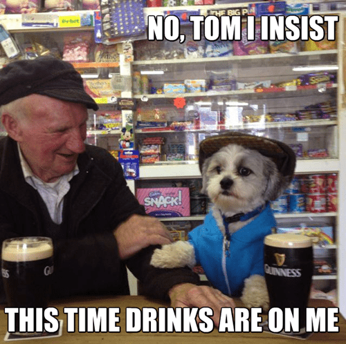 dogs,drunk,guinness,funny