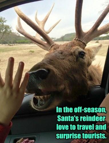 reindeer surprise santa - 8463972864