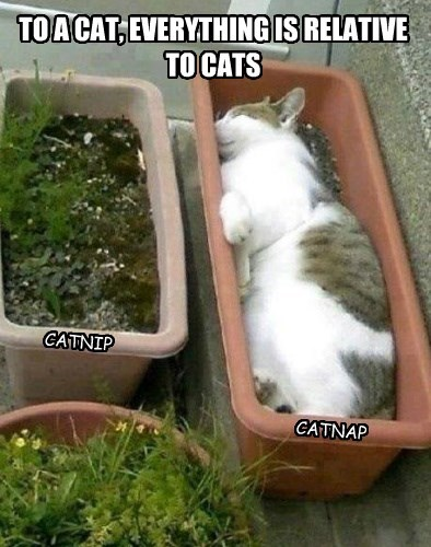 nap,catnip,relative,Cats