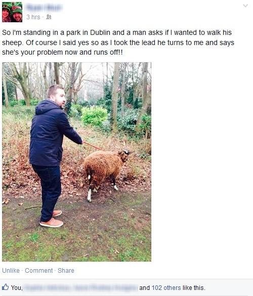 funny-facebook-fails-pets-sheep-prank