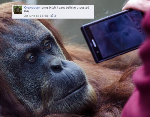 funny-facebook-pic-selfie-tag-photo