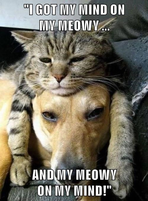 cat,dogs,mommy,caption,money,puns